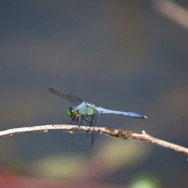 Dragonfly – June 10, 2012